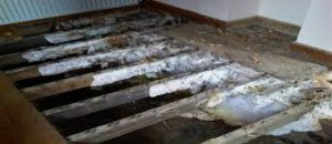 cost of treating dry rot